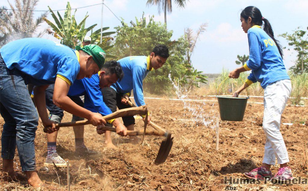 Program Studi Produksi Tanaman Perkebunan
