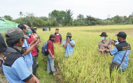 KELOMPOK TANI MULTIBALIWO BERKUNJUNG KE SEED TEACHING FARM PUSAT PENELITIAN & PRODUKSI BENIH HIBRIDA (STEFA) POLINELA
