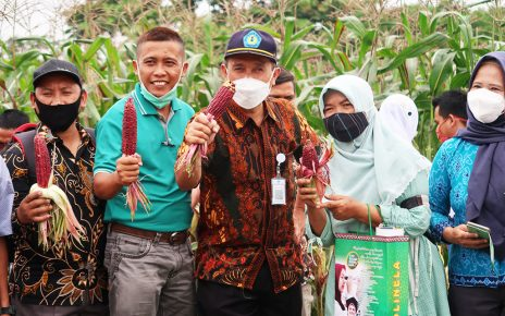 Panen Jagung Ungu Polinela Bersama Penyuluh Pendamping Program Petani Milenial
